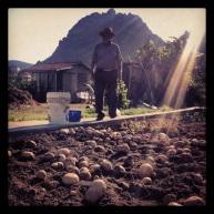 Recogida de patatas en la huerta de Arnedillo.